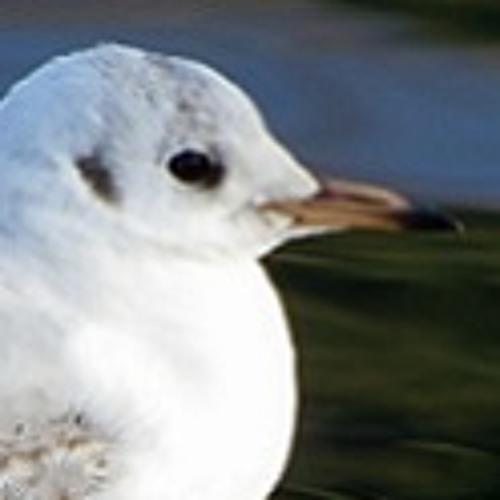 99bird's avatar