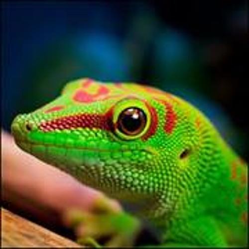 David Raptor's avatar