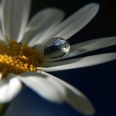 luli pipita