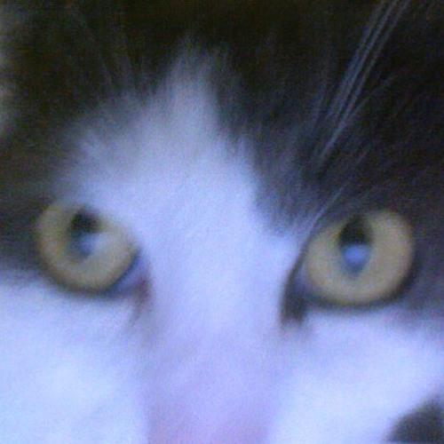 Weetbix the cat's avatar
