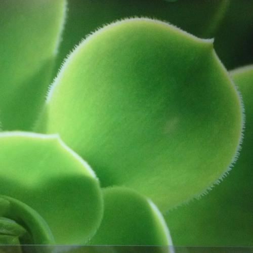 greener_days's avatar
