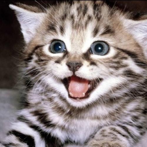 Kakkoii Cat's avatar