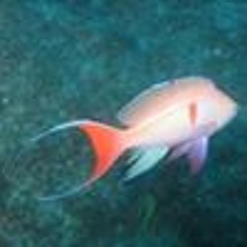 Noel Deichfischer's avatar
