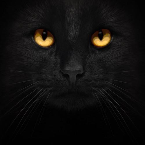 Brenqen's avatar