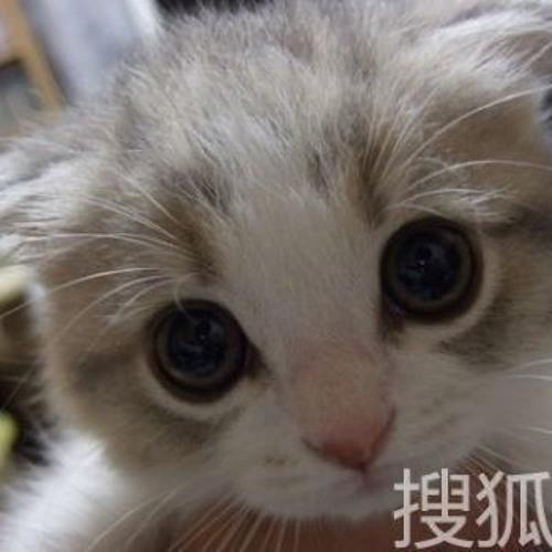 Xumin Zhuang's avatar