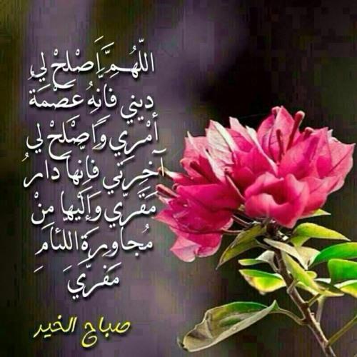 Abdulmohsen mohanna's avatar