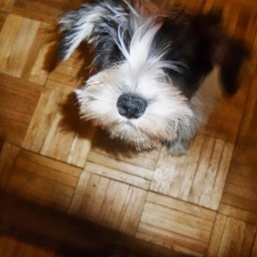 Marisa Valadez 1's avatar