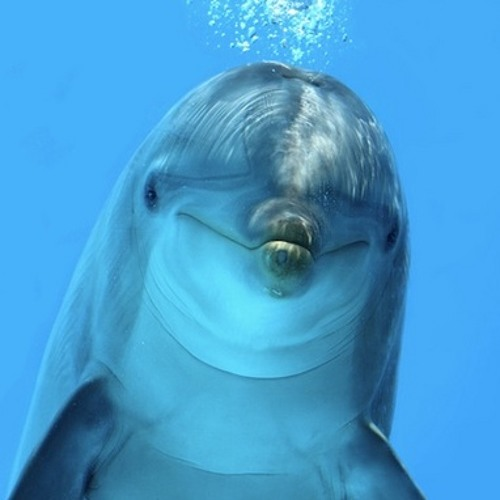 d3phi's avatar