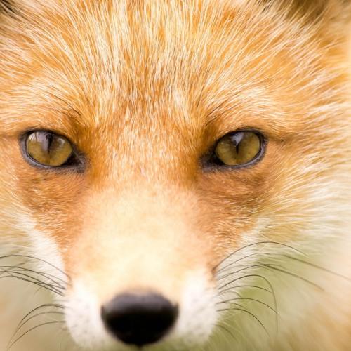 Foxter17's avatar