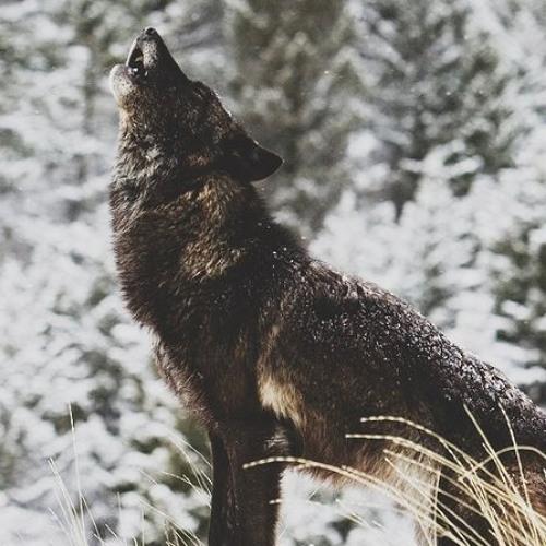dwolfe888's avatar