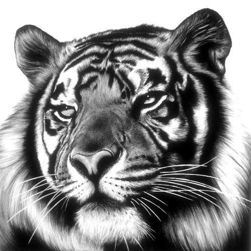 johnxx7's avatar
