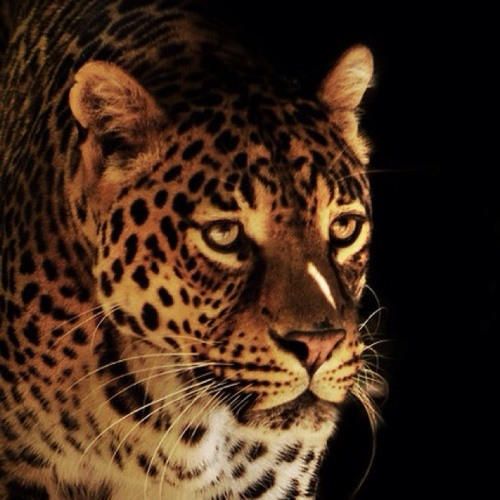ebutcyn's avatar