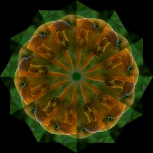 Terramacdyl's avatar