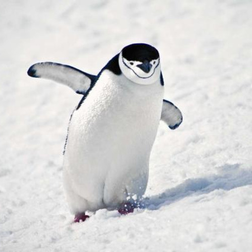 Lil Penguin's avatar