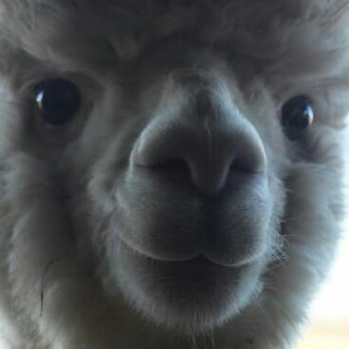 jerry1999's avatar