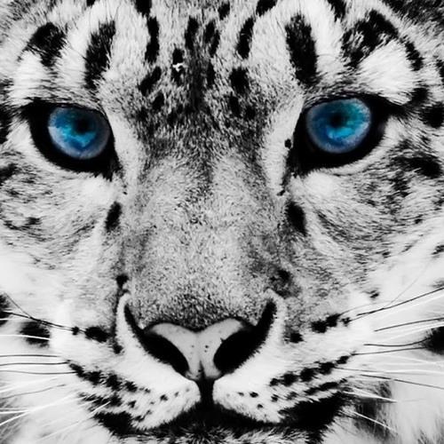 yaya_kauai's avatar