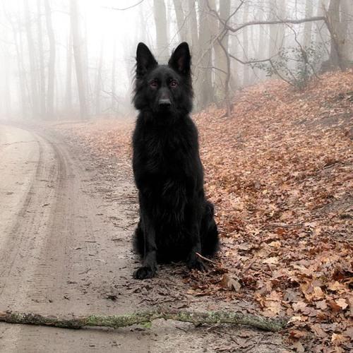 daniel.maze's avatar