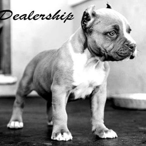 Da Dealership   Dig This's avatar