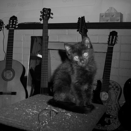 Tommy Tha Cat's avatar