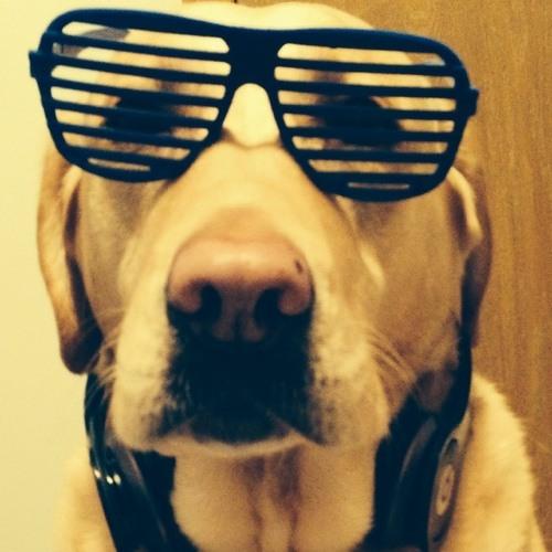 Hipster Dog's avatar