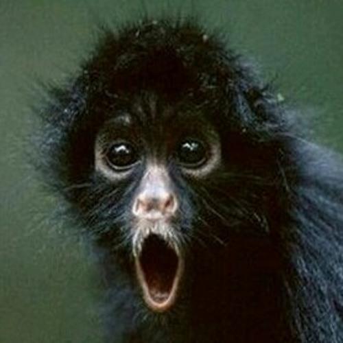 monkey_cheeks's avatar