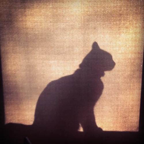 BlueCavy's avatar