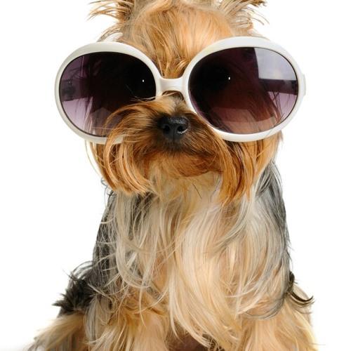 puppy7402's avatar