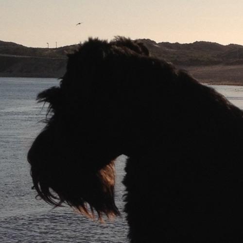 animalbox's avatar