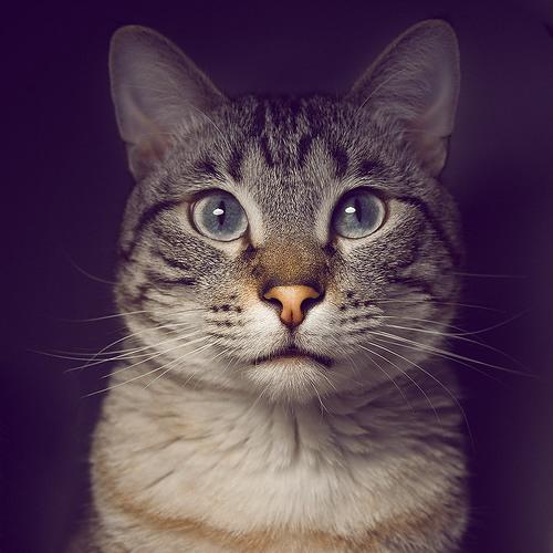 tangram's avatar