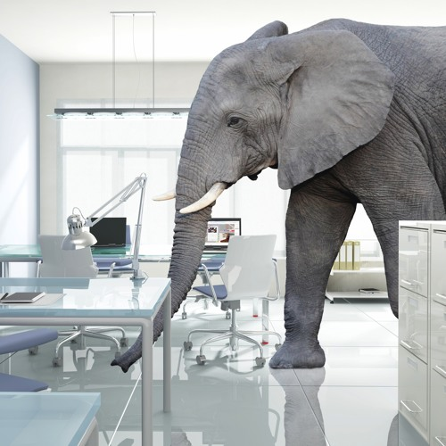 elephantintheroom.io's avatar