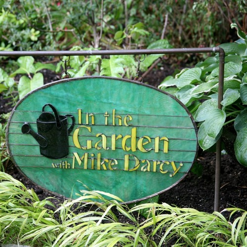 In The Garden With Mike Darcy for 02-07-15