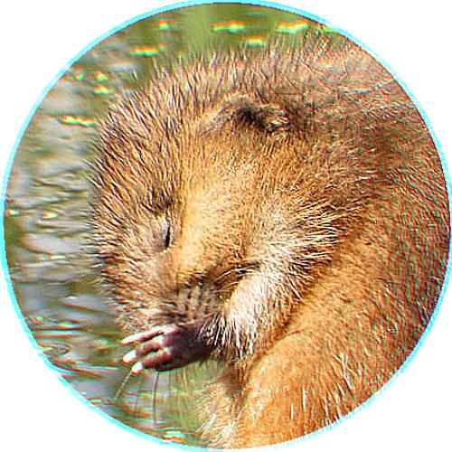 Bisamråtta's avatar