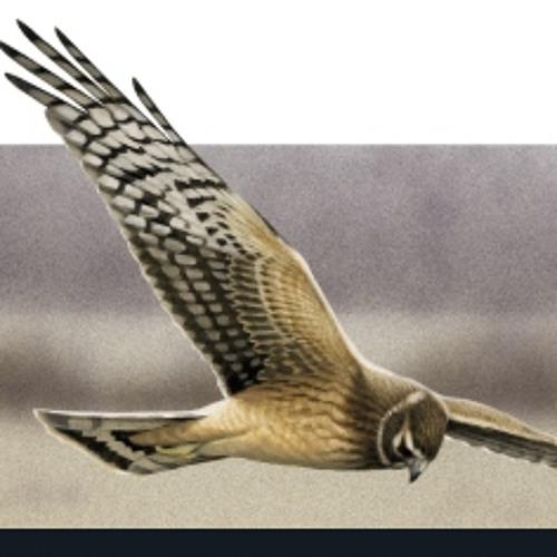 birdingfrontiers's avatar
