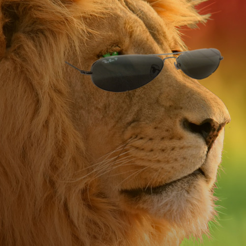 Leo McCulloch's avatar
