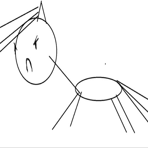 rory rosen's avatar