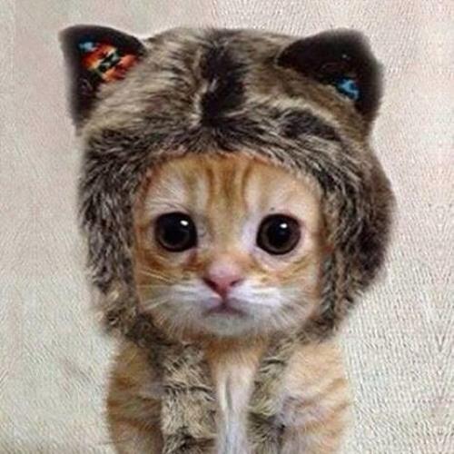 Meowlolz's avatar