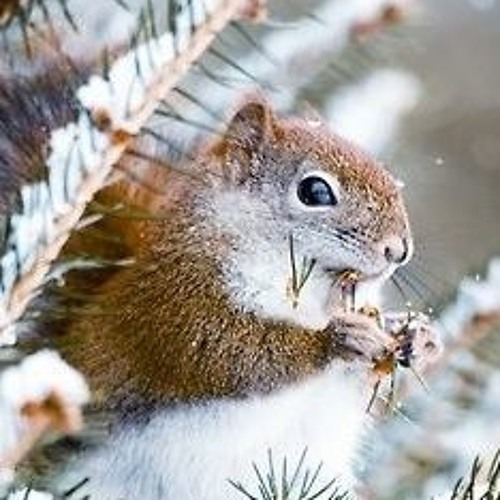 Ghost Squirrel's avatar