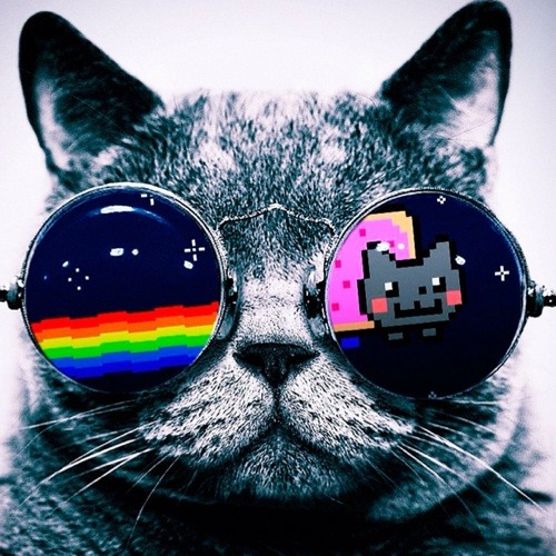 ANGELO THE PARTY CAT!!!'s avatar