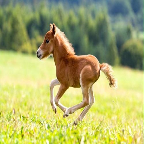 Horselover1483's avatar