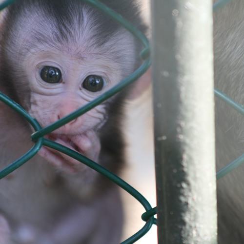 Save Our Monkeys's avatar