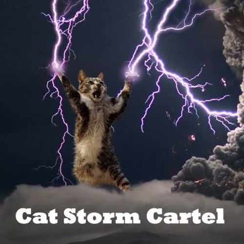 Image result for cat storm