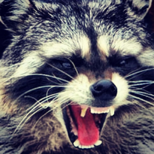 Raccoon Renegade's avatar