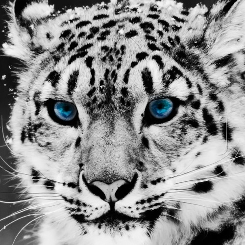 BigCatSound's avatar