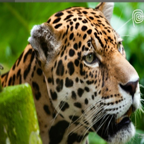 eljaguaray's avatar