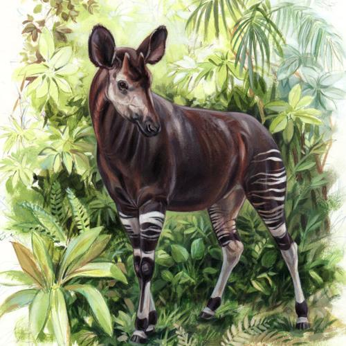 okapi emilio's avatar