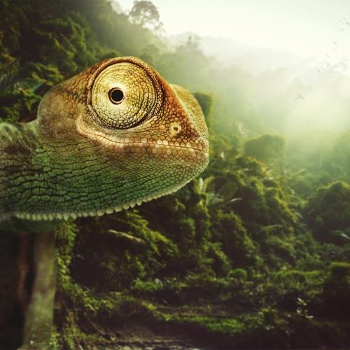 Symbiotic Nature's avatar