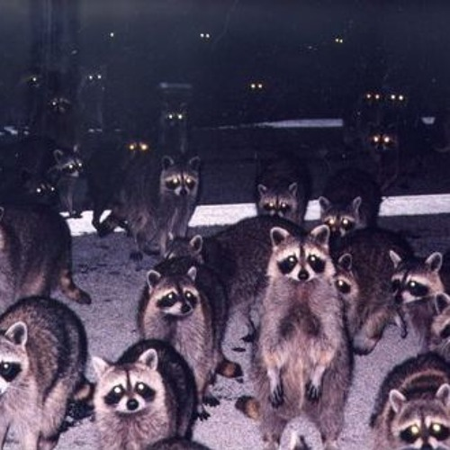The Raccoon Discjockey's avatar