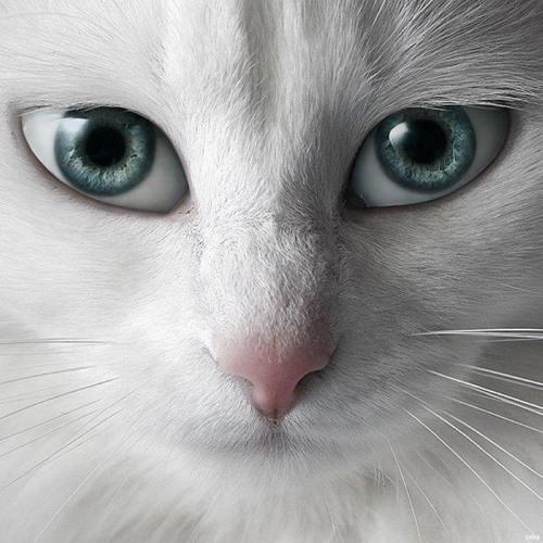 TIFFANIX's avatar