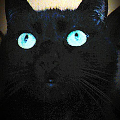 Biggi P's avatar