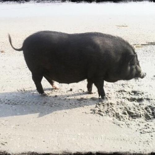 Black Pig's avatar